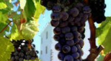 Portugal wine tour
